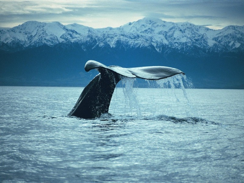 Tours and activities in Christchurch and to areas around New Zealand including Whale Watch Kaikoura and Christchurch based NZ day tours