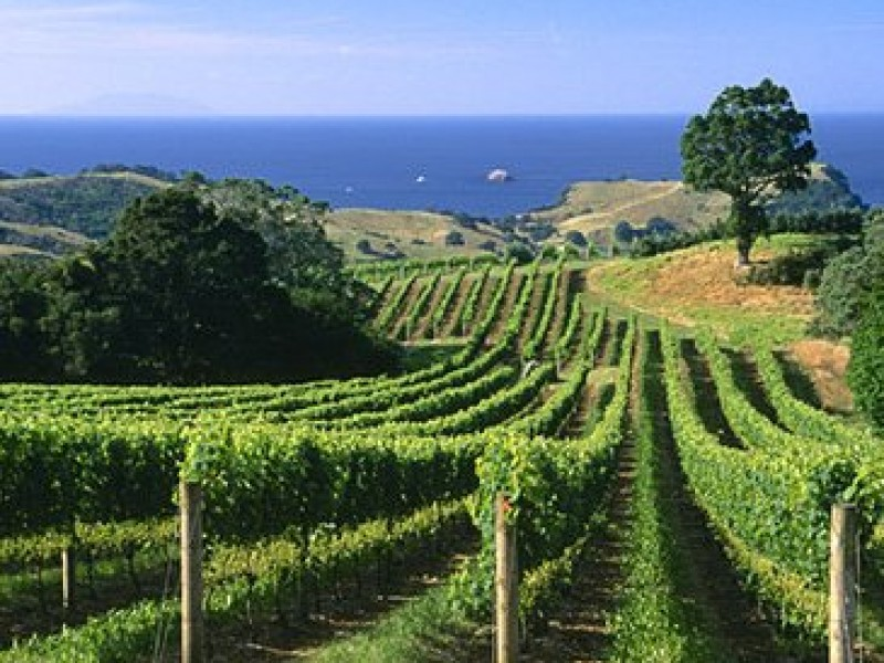 Food And Wine Tasting Tour Of Waiheke Island From Auckland